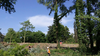 Természetvédelmi eljárás közben is vágják a fákat Keszthelyen