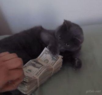pénz3.gif