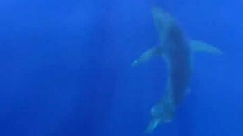 Negyven éve először láttak fehér cápát Spanyolországnál