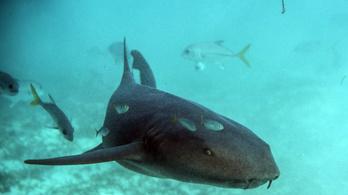 Kézből akarta etetni a cápát, soha nem fogja kitalálni, mi történt ezután