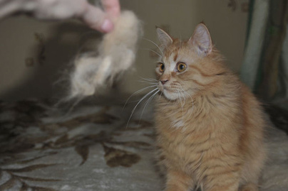 macska-szor