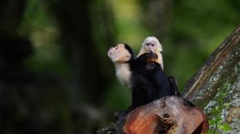 társkereső oldal tudományos majmok Isten társkereső sider