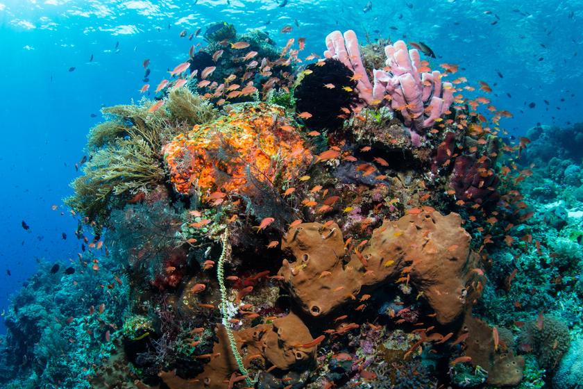 Az indonéziai Raja Ampat korallzátonyának egy felelőtlen turistahajó okozta a vesztét 2017-ben. A Caledonian Sky nevű hajó madárlesre érkezett a területre a fedélzeten száz turistával, és a kapitány valamiért úgy döntött, hogy nem várja meg a dagályt, ezzel elpusztítva 1600 négyzetméternyi korallt. Ráadásul, mivel a hajó megfeneklett, a segítségére érkező vontatóhajó további károkat okozott az ökoszisztémában.