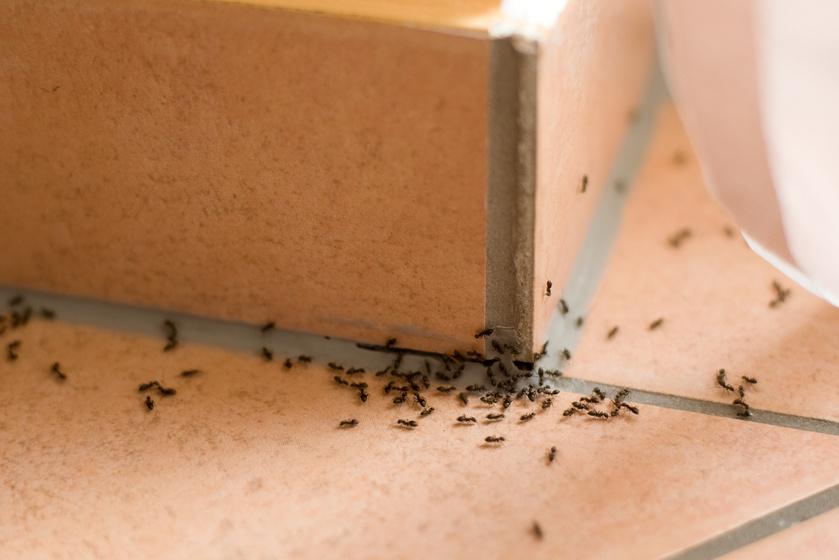 6 bevált, vegyszermentes módszer a rovarok ellen: messziről elkerülik tőlük a lakást