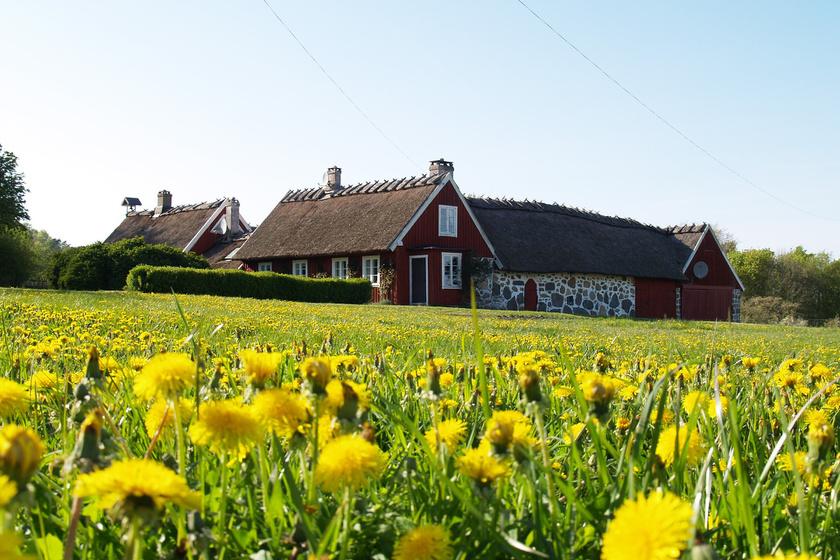 Mit szólnál, ha minden reggelt egy sétával indíthatnál a friss levegőn, egy virággal borított mezőn?