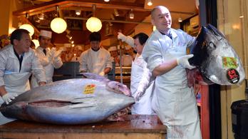 A hal, ami félmilliárd forintba került