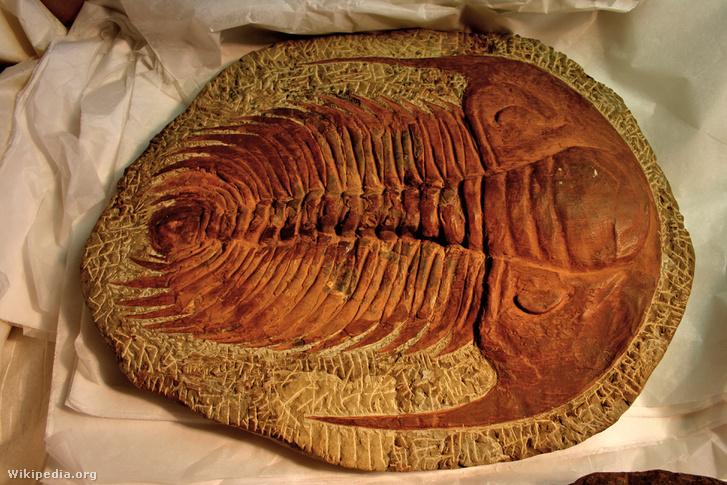 Egy trilobita fosszíliája
