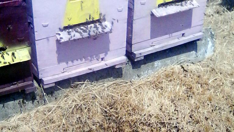 Görcsbe rándulva pusztultak tömegesen a somogyi méhek