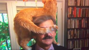 Macska trollkodta szét az antikommunista aktivista iszonyú komoly interjúját