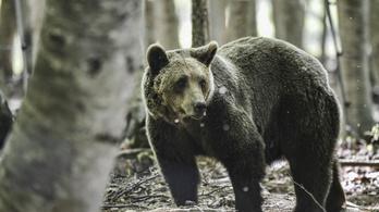 Dolgát végző horgászra támadt egy medve Szlovákiában