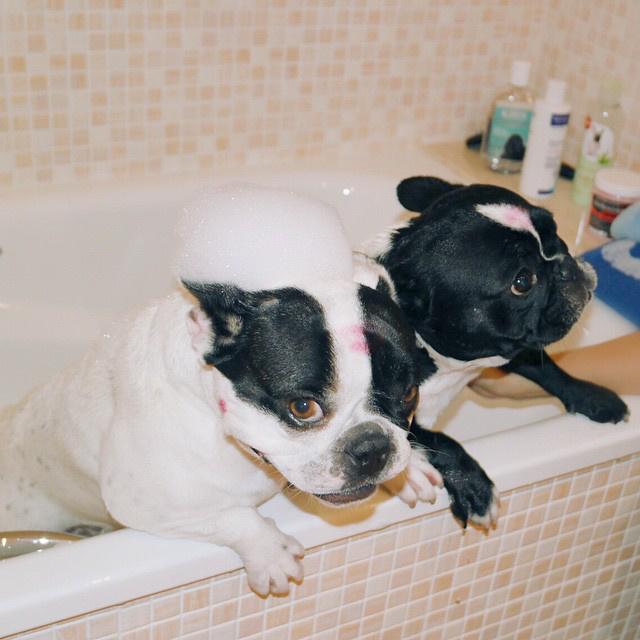 Hát persze, mondjuk még két kutya