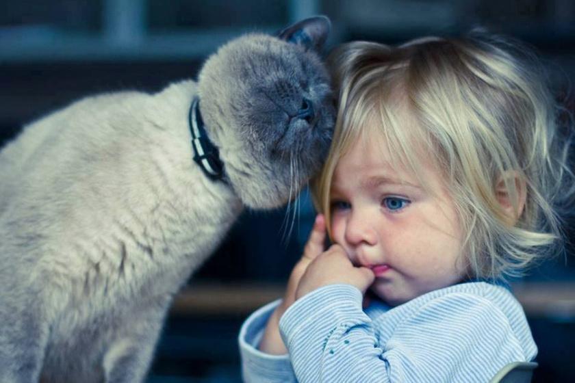 Fotók, amik bizonyítják, hogy minden gyereknek kell egy cica