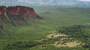 Nem is az esőerdő, a szavanna van a legnagyobb veszélyben