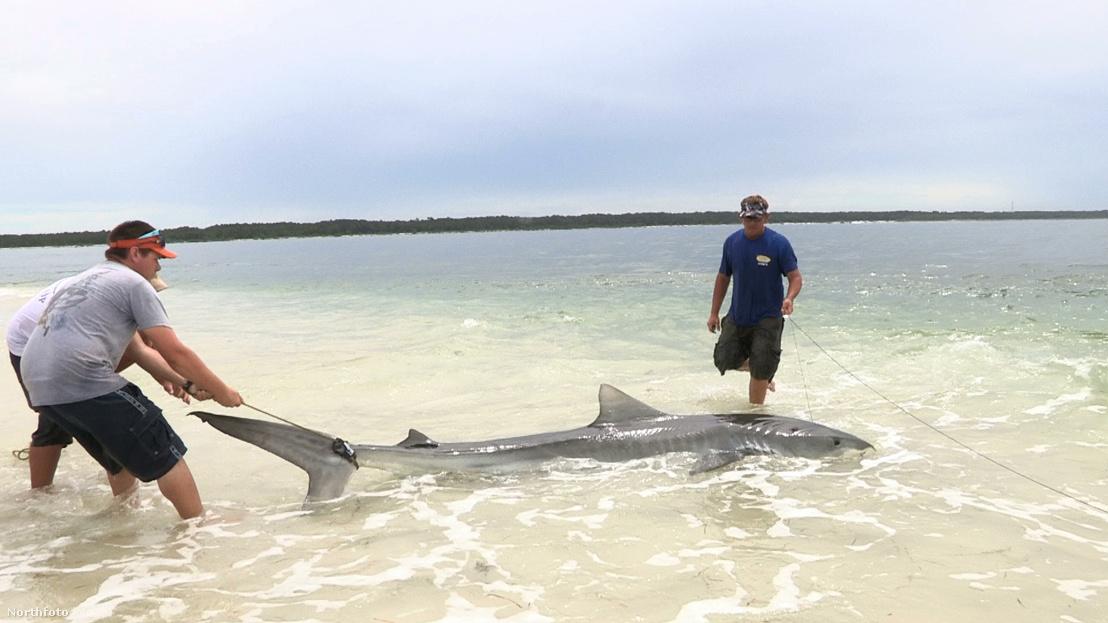 tk3s bm shark landing 02332141