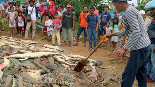 Egy ember halála miatt közel 300 krokodilt mészároltak le