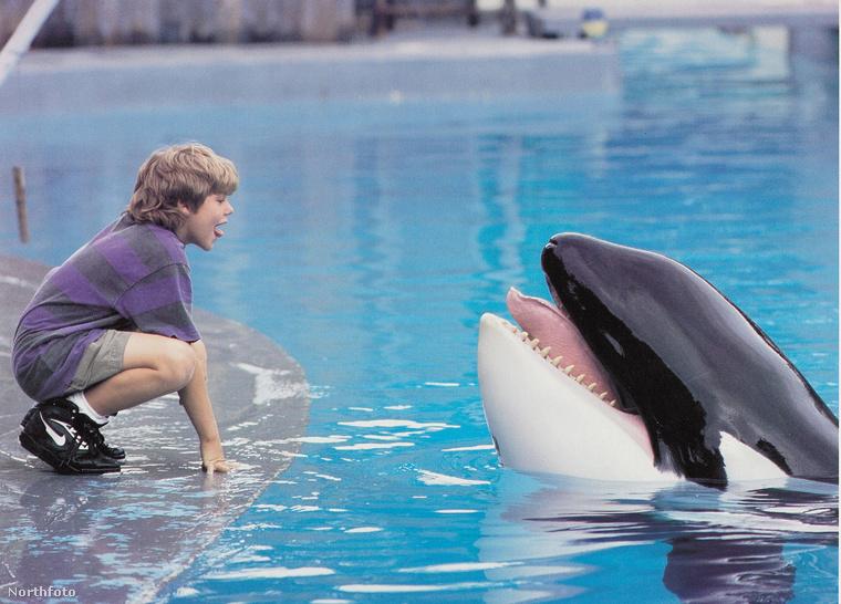 Végül a főhős...                         Nem a bálna, mert azt azért biztos sokan tudják, hogy Willyt, vagyis Keikót 2002-ben szabadon engedték, de a filmmel ellentétben ő nem tudott teljesen visszaszokni a természetes környezetéhez, így 2003-ban elpusztult.