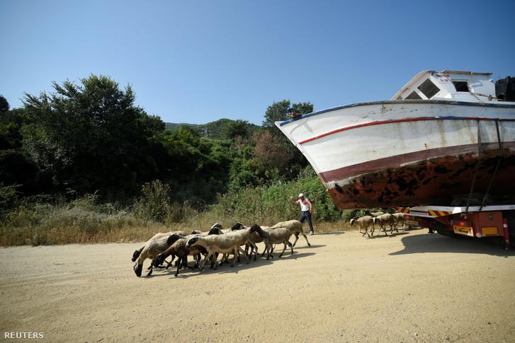Birkák szaladnak el Szteliosz Didionisz leadott hajója mellett