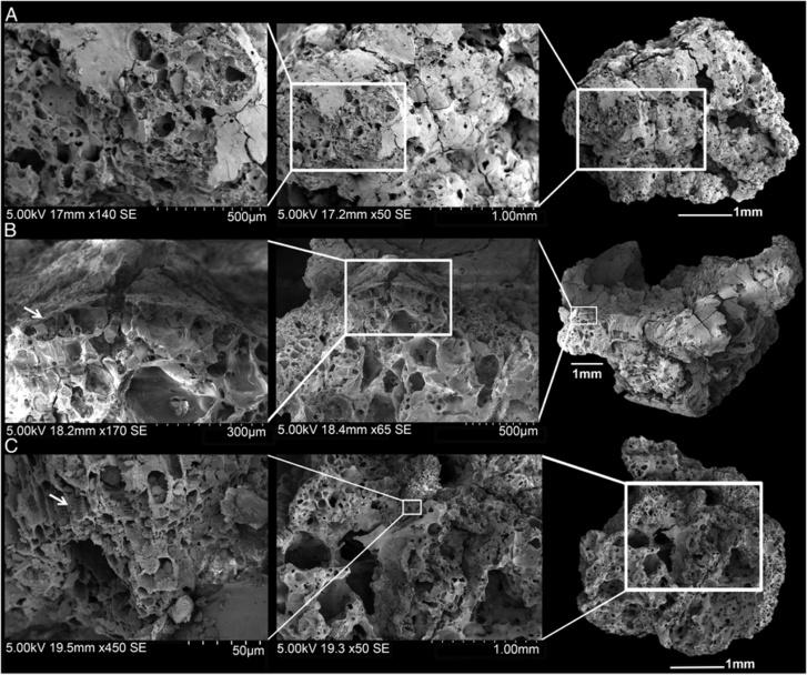 Az elszenesedett kenyérdarabok mikrószkópos elemzése