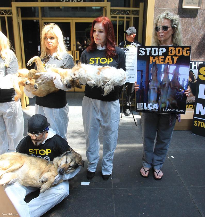 a kutyahúsért folytatott kutyagyilkosságot reprezentáló döglött kutyák voltak.
