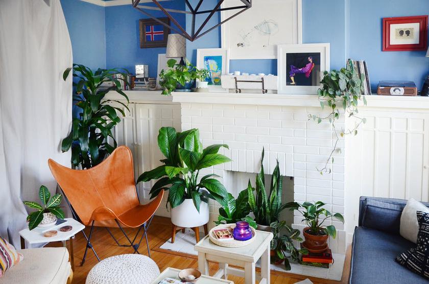A kis lakás minden pontján ott vannak a zöld növények. Ezeket Jessica a helyiségek adottságait figyelembe véve választotta ki.