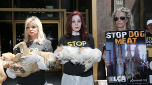 Kim Basinger és Priscilla Presley döglött kutyákkal demonstrált