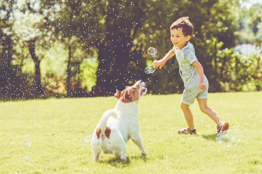Kutya jó Kutyafesztivál és mesés kincsek - Sok ingyenes esemény is lesz
