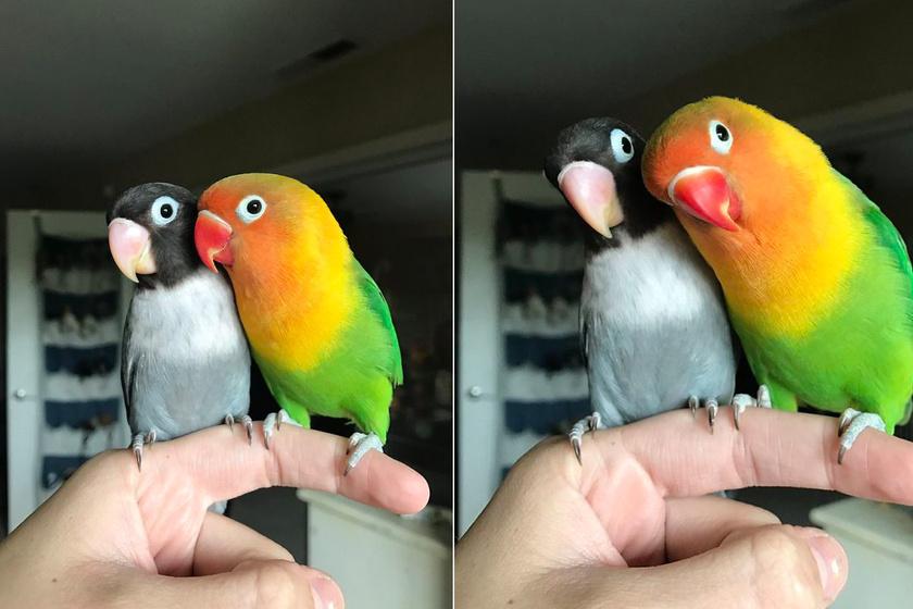Ennek a 2 madárnak szebb szerelmi története van, mint sok emberi párnak