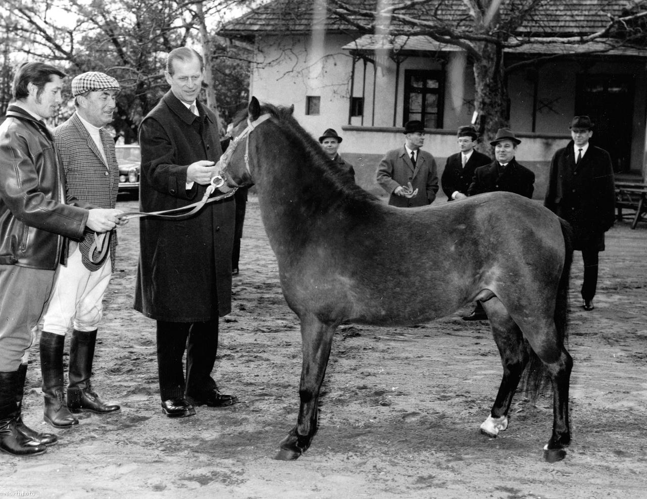 Fülöp herceg többször is járt Magyarországon. A képen 1973-ban tekint meg pónit. 1993-ban II. Erzsébettel együtt jártak az Országos Széchényi Könyvtárban is.