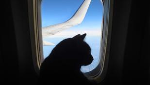 Mikor vihetem fel a háziállatot a repülőre?
