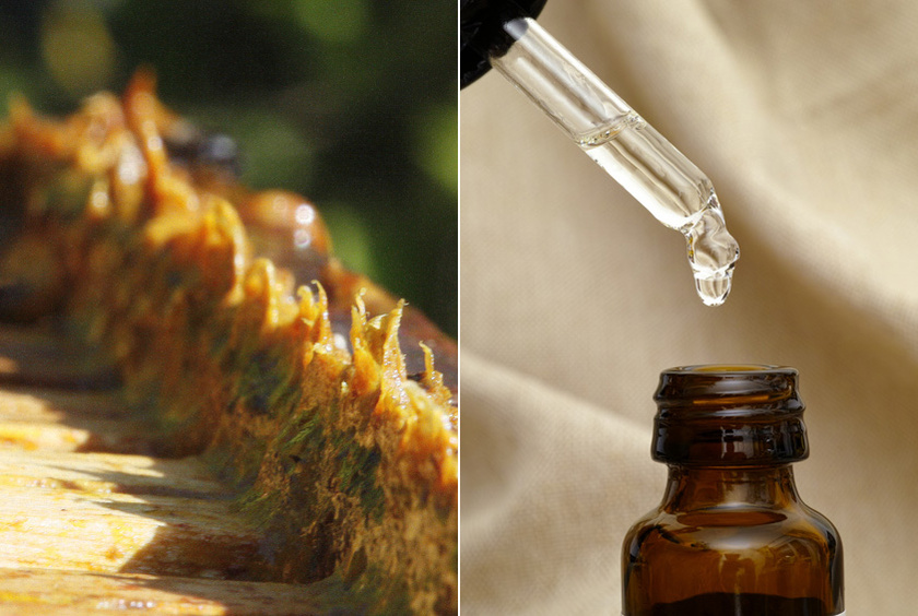 Elzsibbasztja és fertőtleníti az aftát a propolisztinktúra. Ehhez áztasd a propoliszt annyi 70%-os alkoholba, ami ellepi - lezárt üvegben egy hét alatt kész. Drogériában készen is kapható. Fültisztító pálcikával ecseteld!