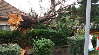 Hétfői vihar: 230 esetben nyújtottak segítséget a tűzoltók