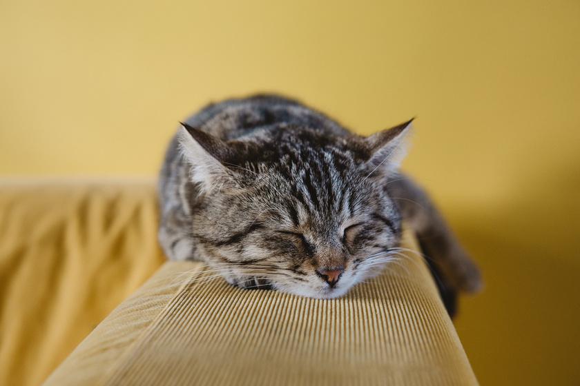 macska-kanape-macskaszor