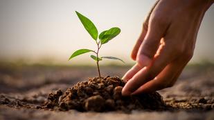 Milyen szülő vagy: ács vagy kertész?