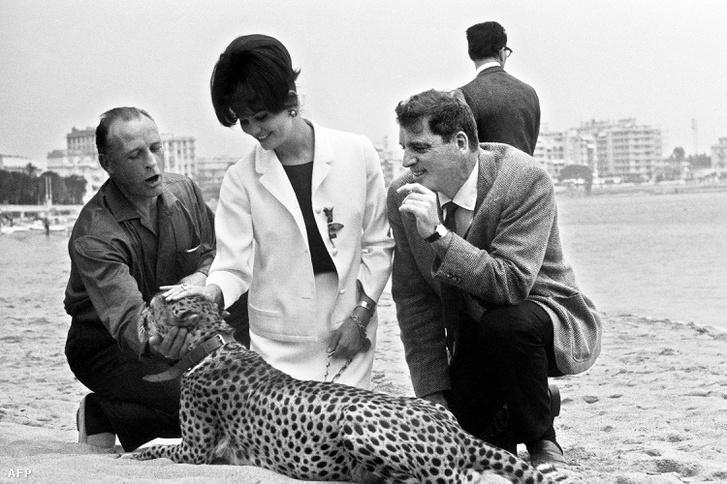 Claudia Cardinale 1963-ban Cannes-ban, ahol bemutatták A párduc című filmet.
