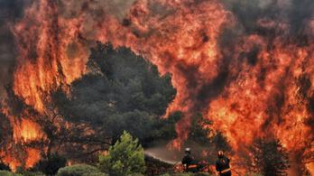 Komoly jelek utalnak arra, hogy gyújtogatás okozta a görög erdőtüzeket