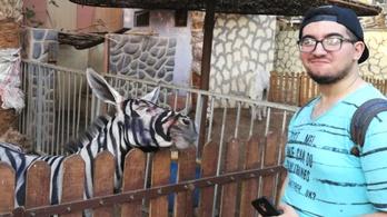 Zebrának festhettek át szamarakat egy Egyiptomban