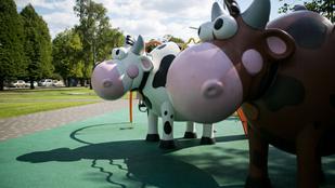Bebújhatsz a tehén hátsójába, kicsúszhatsz az oldalából