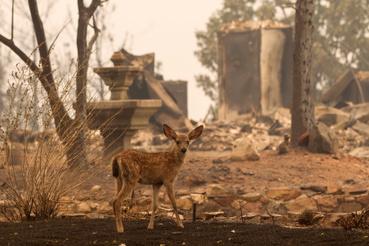 Redding környékén hatalmas terület vált a tűz martalékává