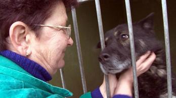 Helyhiány miatt altatni kell az Illatos úti kutyatelepen