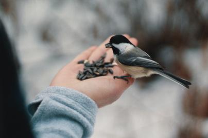 madáretetés madarak télen madáretető madár (4)