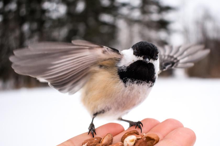 madáretetés madarak télen madáretető madár (3)
