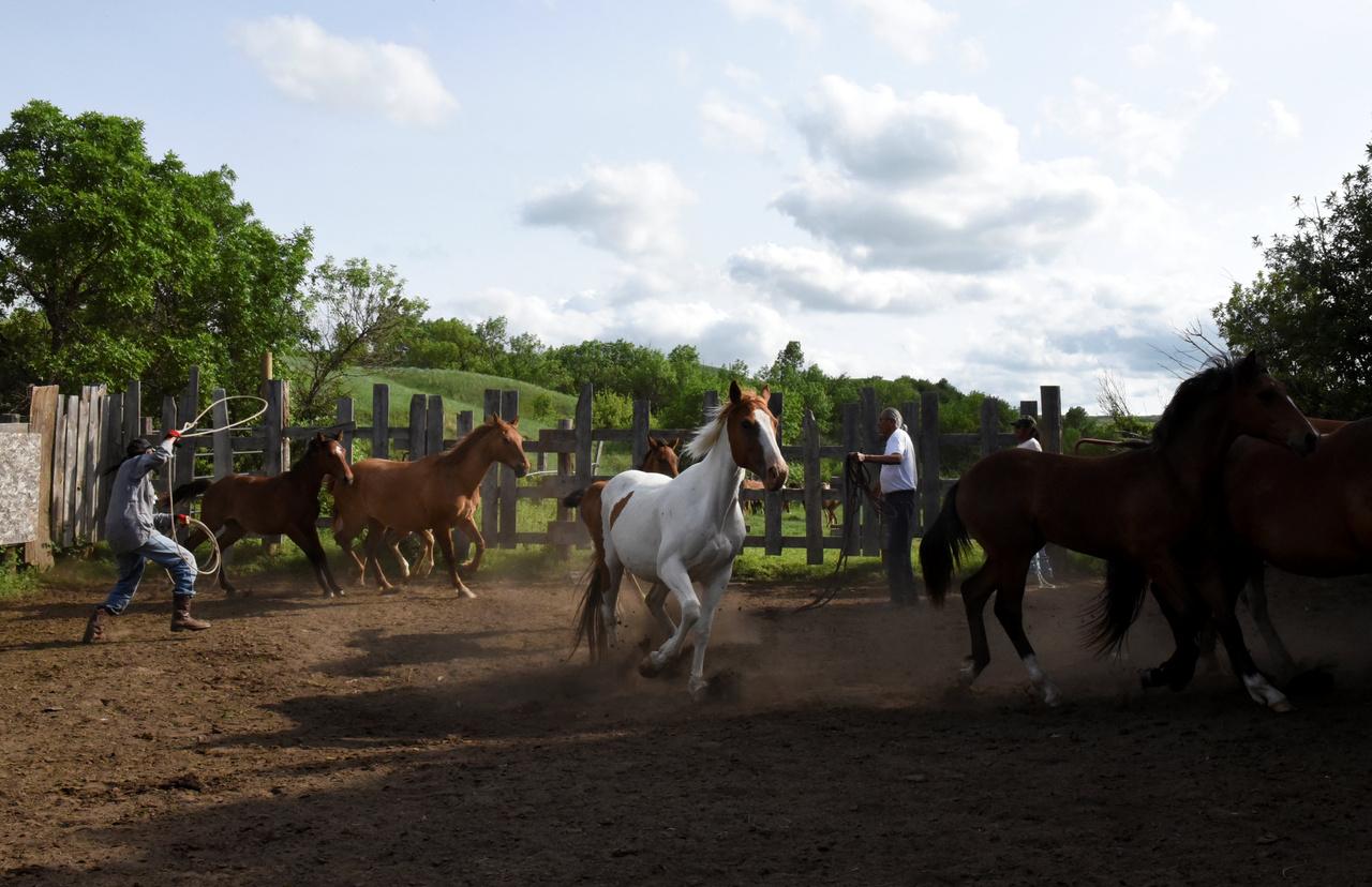 Miután a síksági indiánok az európai telepesek hódításai után megismerték a háziasított lovat, lóháton jártak a nagy bölénycsordák nyomában, benne mérték a vagyont, de spirituális jelentőséget, gyógyító szerepet is tulajdonítanak neki: a ló nemcsak cserealap és a vadász hű társa, de orvosság is. A ló a hagyomány szerint reggel először, a gazdája előtt eszik, ő az első, az ember csak az abrakolás után következik a sorban.