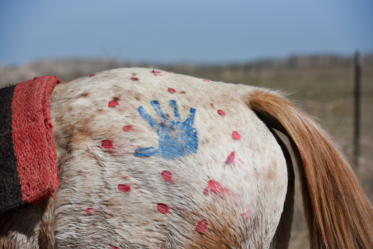 Kézlenyomattal díszített lótompor indulás előtt. Hagyományosan a csaták előtt kaptak a lovak hasonló festést, most ez szimbolikus harc: a résztvevők a lovas túrával annak a 150 évvel ezelőtti békekötésnek akartak emléket állítani, amely úgyis sarokpontja a sziú emlékezetnek, hogy az egyezséget az Egyesült Államok megszegte.