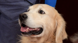 Megnyalta egy kutya, amputálni kellett a kezét és a lábát