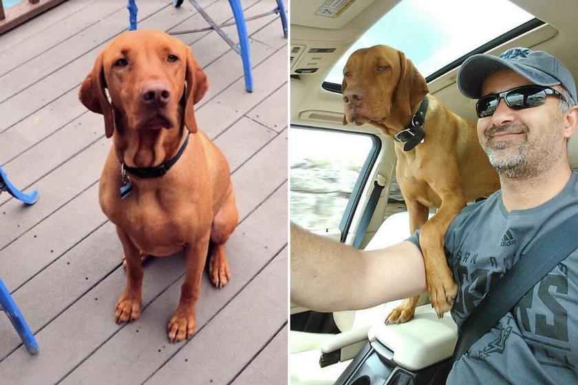 Murray szemében a családfő a falkavezér, és AJ is teljesen odavan a kutyáért.