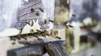 A magyar méhészek fele veszteséget szenvedett