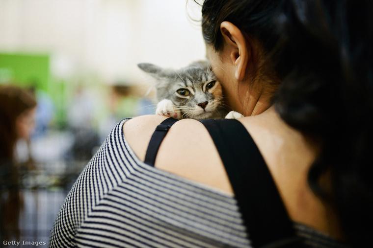 Szóval a továbbiakban nézzük az egyszeri catconozókat, akiknek többsége valamilyen módon macskás ruhákat viselt