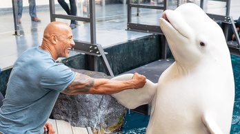 A Szikla lepacsizott egy delfinnel, erre az állatvédők rögtön felbődültek