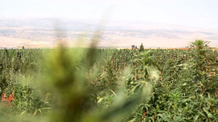 libanon fű