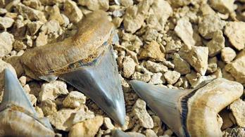 Ősi óriáscápa fogsorára bukkantak egy ausztrál strandon